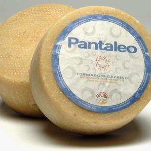 Large_pantaleo