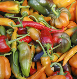 /uploads/storage/text_page_content/image/201210/164/all_star_organic_peppers.jpg