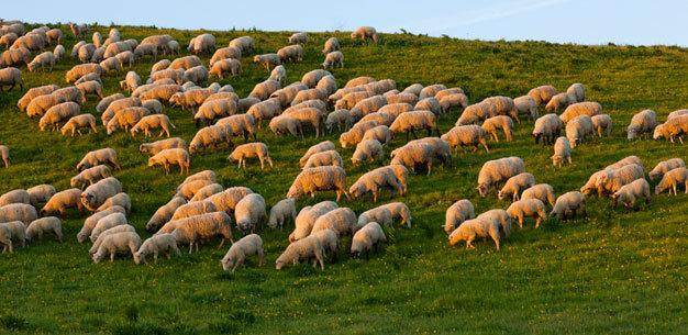 Normalized_sheep_hill